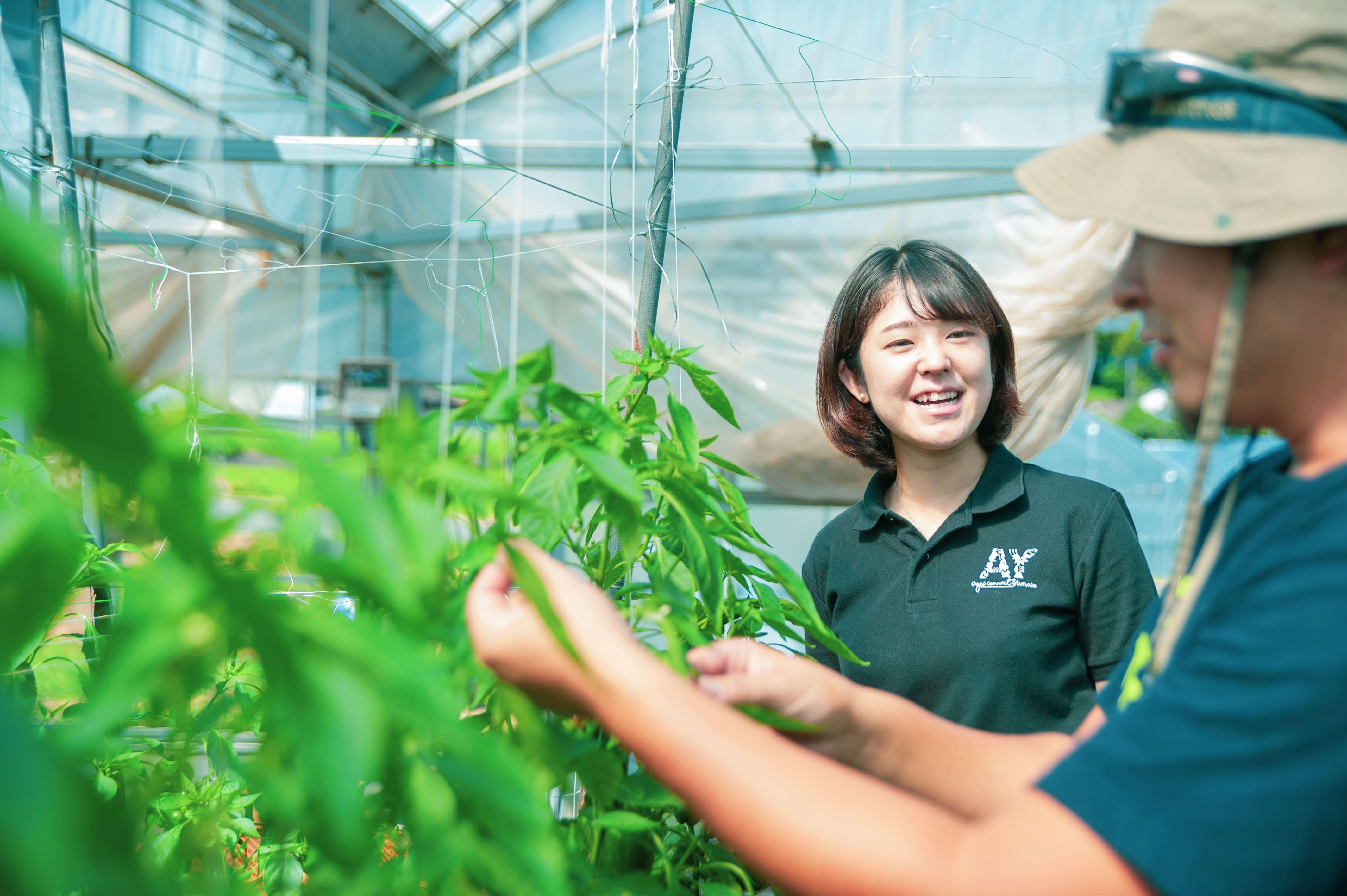 農業コンサルティング